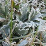Yes, there was Frost!